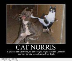 Cat Norris !