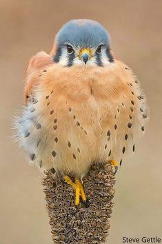 Most Beautiful Birds, Pretty Birds, Love Birds, Nature Animals, Animals And Pets, Cute Animals, Exotic Birds, Colorful Birds, Exotic Pets