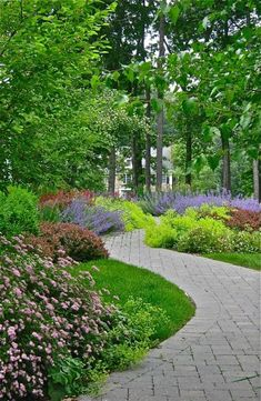 Nice walkway of pavers nicely colored with Spirea, Catmint, Lady's Mantle and Barberry.