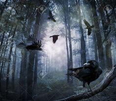 34935873-corvi-neri-che-volano-nella-foresta-di-notte-Archivio-Fotografico.jpg (1300×1137)