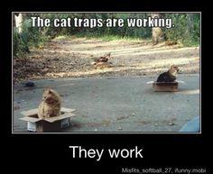 cats and boxes haha