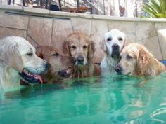 Come on over guys, my master is out for the day.....it's a hot tub party!