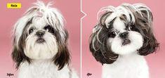RT @ModernDogMag: Extreme Makeover: Canine Edition! #moderndog visit oscarjetson.com to see cool dog art oscarjetson.com