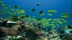 Highlights   Scuba Diving in Puerto Princesa, Palawan   PHILIPPINES