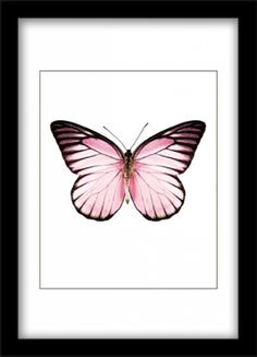 Poster with pink butterfly on white background. The poster matches completely with our different smaller posters with butterflies and bugs. This candy butterfly poster combines effectively with different posters in related pink hues or Butterfly Drawing, Butterfly Painting, Pink Butterfly, Butterfly Print, Poster Collage, Poster On, Collage Art, Poster Prints, Art Prints