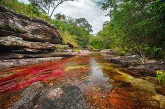 """Caño Cristales River, also known as """"The River of Five Colors,"""" Colombia"""