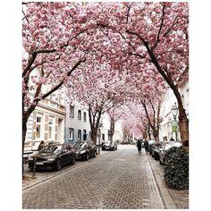 Gibt es eigentlich etwas Schöneres als ein Dach aus rosafarbenen Blüten? Uns fällt auch nichts ein.. #glossystyle #cherryblossoms #kirschblüten #beautiful #glossybox #glossybox_de #springtime #regram @kori_nikkonen