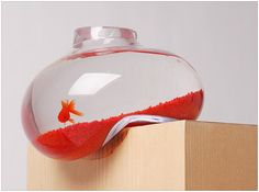 fish tank, ooops, living on the edge...this would drive me crazy!