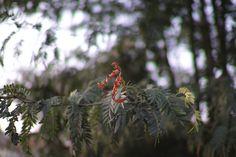 F 1, Art Blog, Wordpress, Holiday Decor, Flowers, Plants, Prime Lens, Plant, Royal Icing Flowers