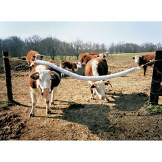how to build a cattle mineral feeder