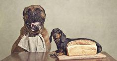 Serena Hodson's Pet Photography