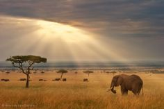 Sunrise in eastern Africa.  Landscape and wildlife photography by Wim van den Heever