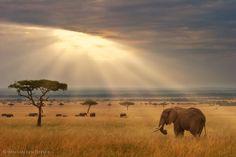 Africa! African safari!