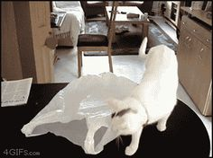 Cat in a bag - http://www.seethisordie.com/startledcats/cat-in-a-bag/ #animals #cats #funny #fun