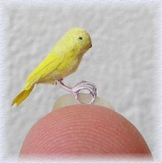 how to: canary