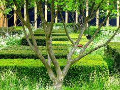 Lovely pruning of tree branch. Like little windows onto the garden.