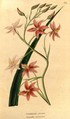 ser.2:v.4 (1845-1846) - Annales de flore et de pomone : - Biodiversity Heritage Library