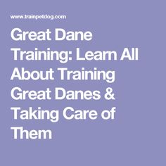 Great Dane Training: Learn All About Training Great Danes & Taking Care of Them