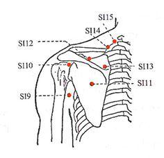 Liver Meridian/LR3 Source Point for the liver. Regulates