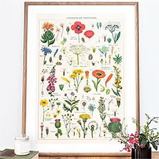 Wild flowers vintage art print / poster by Cavallini & Co. Inspired by the botanic plate that can be found in some old natural science book. Vintage Art Prints, Vintage Posters, All Poster, Poster Prints, Happy Room, Nature Posters, Hanging Posters, Vintage Flowers, Decoration