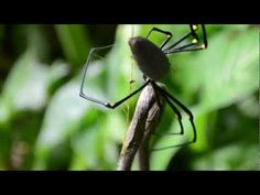 """Photographer Ant Hadleigh caught the whole battle on camera in his backyard in Freshwater, Australia. He said """"A few times the snake managed to get up and attack the spider, and the spider would run back up the web [...] You could see the spider just chewing into it and the part which the spider was eating had gone all black and the insides were bubbling [...]"""""""