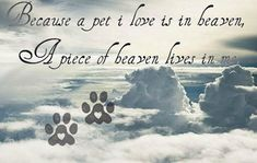 All dogs go to heaven. Heaven Poems, Angels In Heaven, Dog In Heaven Quotes, Animal Quotes, Dog Quotes, Dog Poems, Animal Poems, Qoutes, Dog Love
