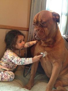 Adorable Pictures of Little Kids With Big Dogs - Pets or Animals Baby Animals, Funny Animals, Cute Animals, Nature Animals, Dogs And Kids, Big Dogs, Giant Dogs, Funny Animal Pictures, Dog Pictures