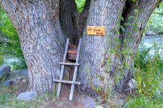 Treehouse Book Nook, Loveland, Colorado photo by sylvan WOW. This would be like being hugged by a tree! A real tree-huggers delight!