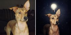 Ban is an acclaimed photographer specializing in surreal photographic compositions that bend the mind and move the soul. Her ongoing dog portrait series, however, began when she adopted a dog of her own and created an image for it. These images are moving as well, but in a different way – because they offer shelter dogs hope.