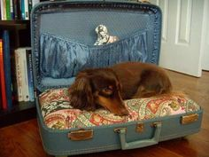 Suitcase dog bed: A vintage suitcase transforms into a dog bed with a little TLC and some fluffy pillows. 30 Awesome DIY Projects that You've Never Heard of Suitcase Chair, Designer Dog Beds, Diy Dog Bed, Old Suitcases, Vintage Luggage, Cool Pets, Pet Beds, Dog Houses, Diy Stuffed Animals