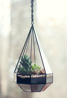 Terrarium (photo by wit & whistle)