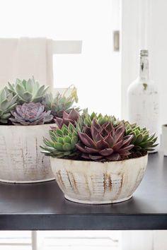 Siete razones por las que tener plantas en casa | Decorar tu casa es facilisimo.com