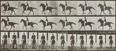 EADWEARD MUYBRIDGE, 1830-1904 | 'Animal Locomotion, Plate 618 and 619' (Canter; saddle; brown horse)