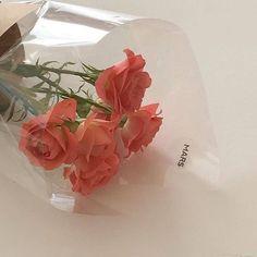peach aesthetic orange pink pastel light korean soft minimalistic kawaii cute g e o r g i a n a : a e s t h e t i c s Peach Aesthetic, Flower Aesthetic, Aesthetic Style, Aesthetic Light, Summer Aesthetic, My Flower, Beautiful Flowers, Fresh Flowers, Pink Nature