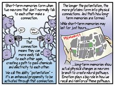 Comic explainer: how memory works Memory Words, Short Term Memory, Neurons, Physics, Improve Yourself, It Works, Two By Two, Comic, Facts