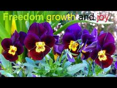 Abraham Hicks 2016-The 3s of a beautiful life(new) - YouTube