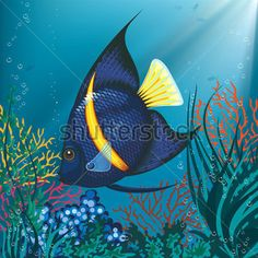 Layer paint tropical copperband butterfly fish by charfade for 405 tropical fish