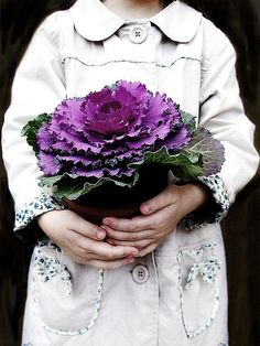 Purple and green Shades Of Purple, Green And Purple, Pretty Flowers, Purple Flowers, Cabbage Flowers, Purple Cabbage, Autum Wedding, Ornamental Cabbage, All Things Purple