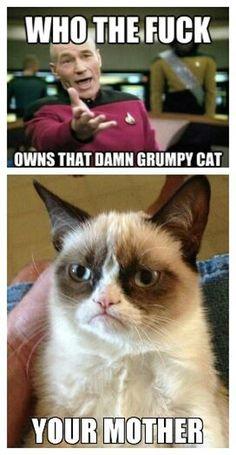 Who Owns Grumpy Cat? See more funny pics at killthehydra.com!