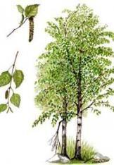 Výsledek obrázku pro obrázek břízy Flowers, Trees, Blog, Pharmacy, Tree Structure, Blogging, Royal Icing Flowers, Wood, Flower