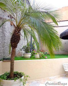 Palmeira de pequeno porte, pertence à família Arecaceae, nativa da Ásia, perene, de crescimento lento, altura de 2 a 4 metros e tronco com cerca de 20 cm de diâmetro, marcado pela inserção das folhas, dando aspecto de escamas grossas. Folhas são compostas, pinadas de coloração verde escura brilhante, com cerca de 1,50 de comprimento, ...