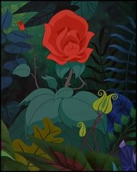 Rosa / Rose / Las Flores del Jardín / The Flowers of the Garden ...