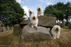 We found a nice old dolmen to pose..