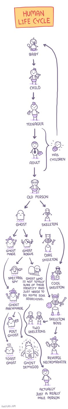 Human Life Cycle.