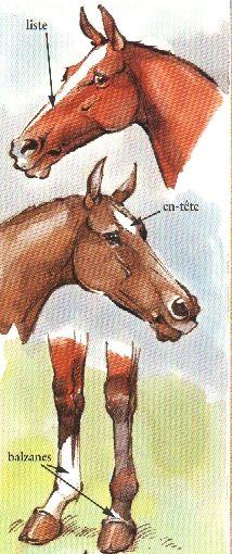 Particularités des robes Watercolor Animals, Pet Birds, Moose Art, Future, Pictures, Crafts, Horse Anatomy, Animals And Birds, Watercolor Painting