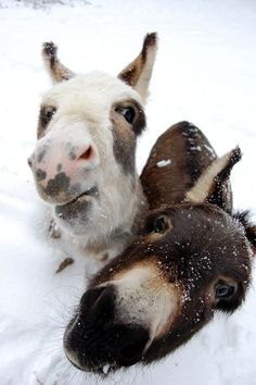warm noses