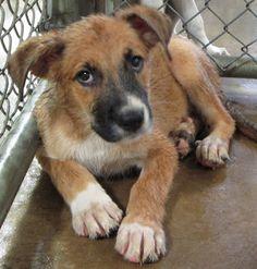 lizardmarsh: EL CAMPO TX: Urgent! 5 puppies  - PLEASE SOMEONE H...
