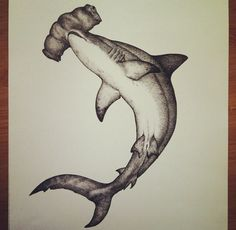 Hammerhead drawing. #drawing #art #shark