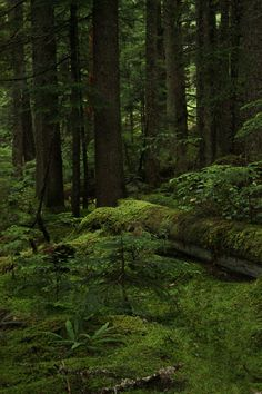 Beautiful Forest.
