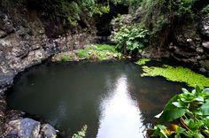SIARAM :: Zonas Húmidas :: Ribeira do Engenho - Santa Maria